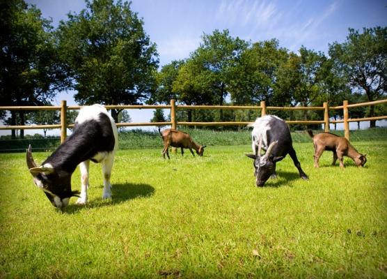 Nieuw: dierenweide op Klein-Rijnsburg