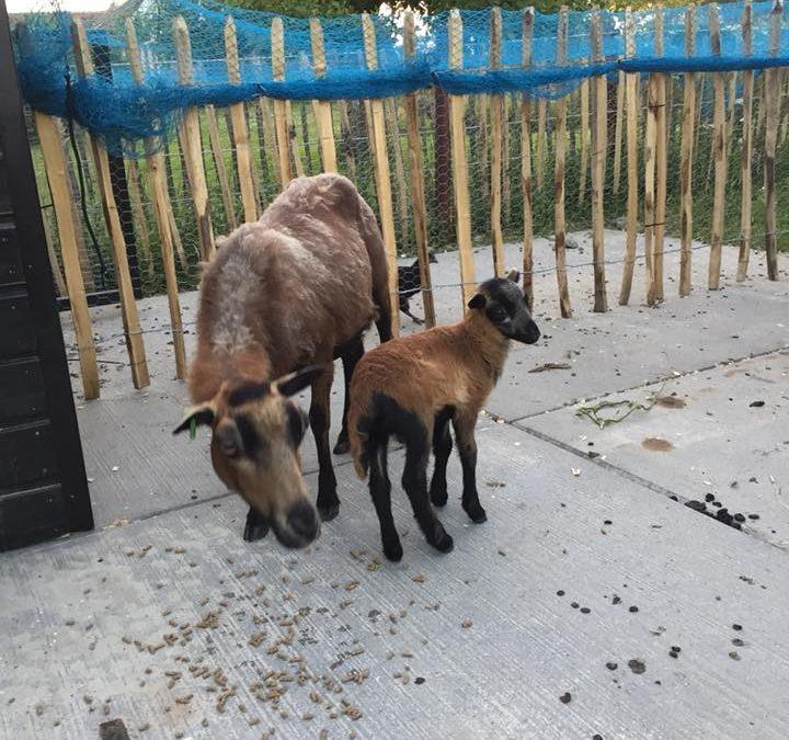 Bekijk snel de dieren op Klein Rijnsburg