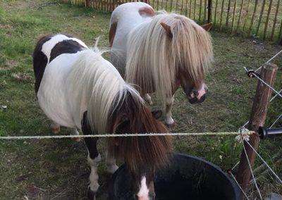 paarden2